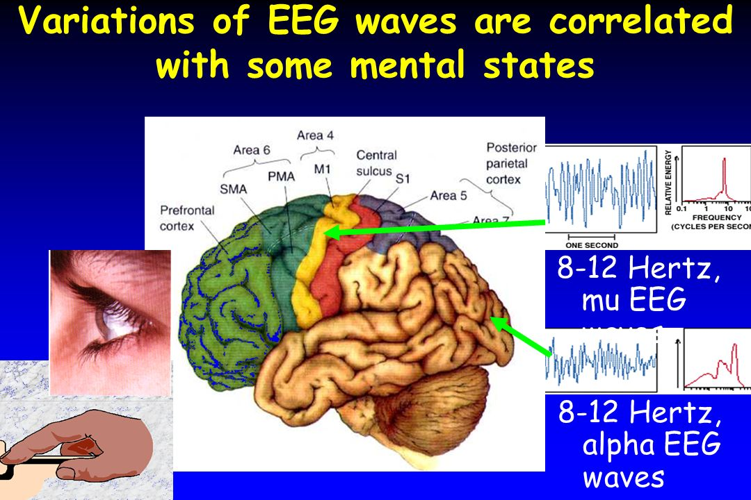 Variations of EEG waves are correlated with some mental states