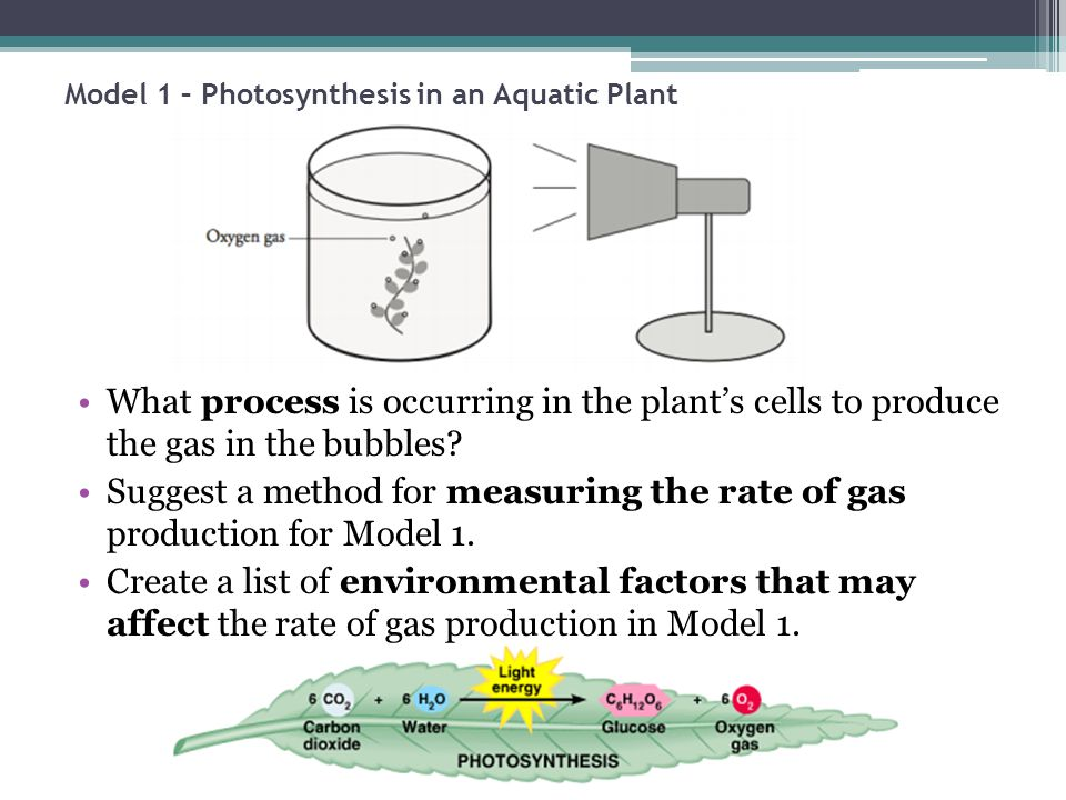 aquatic plants rate of photosynthesis The only difference between photosynthesis in aquatic and land plants is where in their environments they get these nutrients land plants get water from the ground at any rate, photosynthesis began among bacteria, before multi-celled plants and animals became prominent however, non-photosynthetic bacteria had.