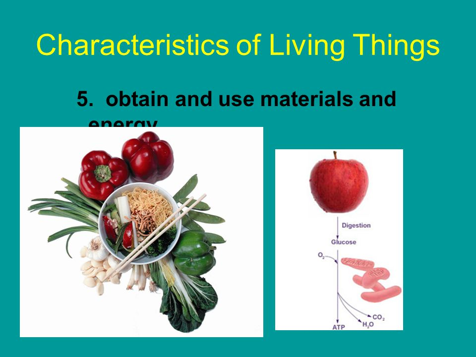 an overview of living things on earth Life science – course overview life science includes materials covering the characteristics of living things, plant and animal cell structures, the characteristics of unicellular and.