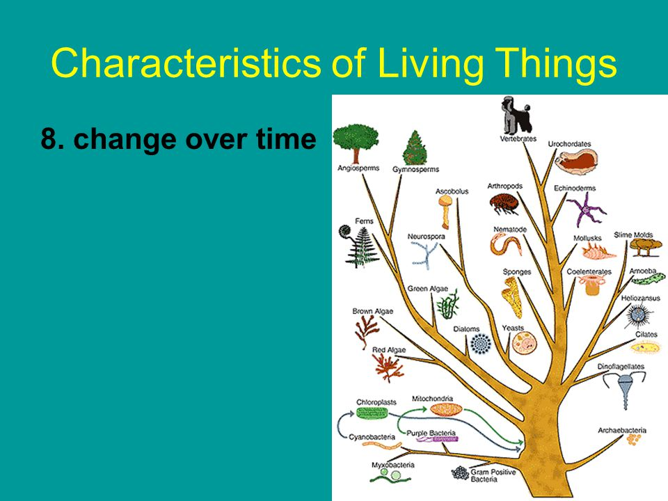 an overview of living things on earth Science year 3 satisfactory  features of living things  understanding of the movement of earth relative to the sun and uses this to explain some observations.