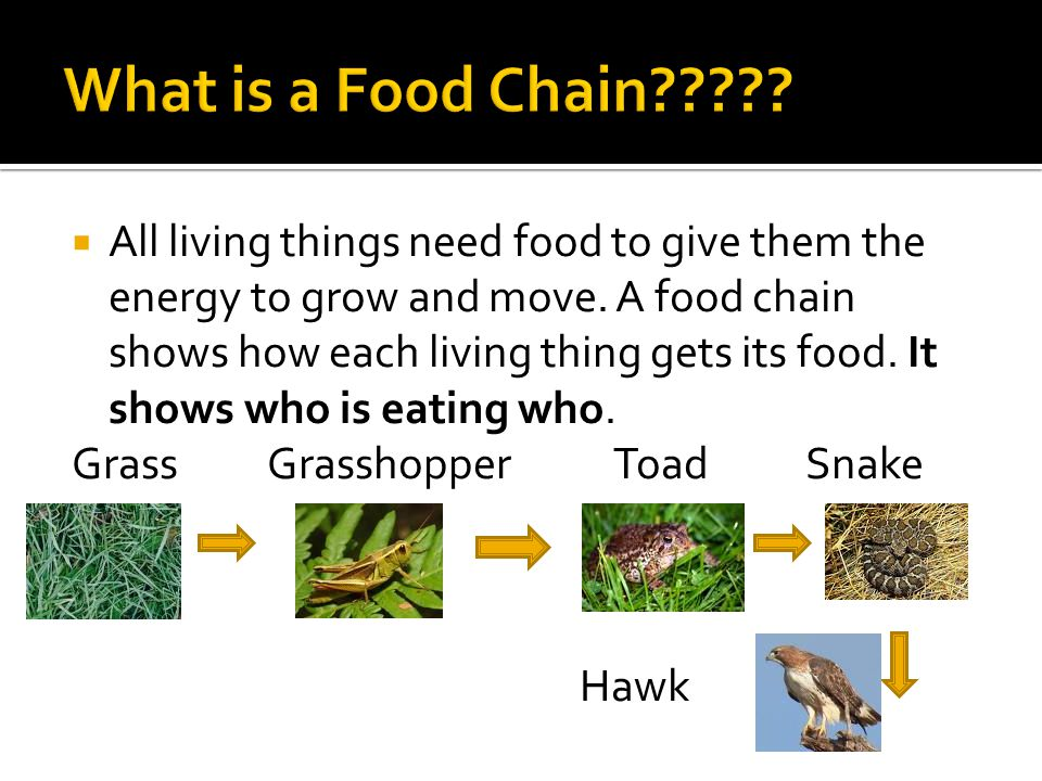food chains and food webs Browse food chains and food webs resources on teachers pay teachers, a marketplace trusted by millions of teachers for original educational resources.