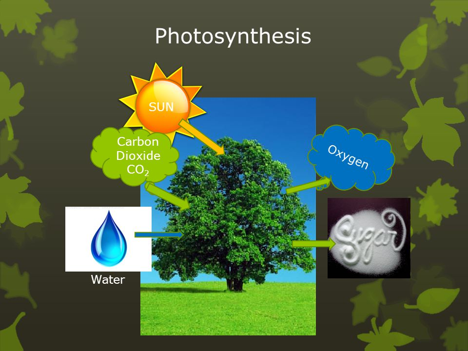 Photosynthesis SUN Carbon Dioxide CO2 Oxygen Water