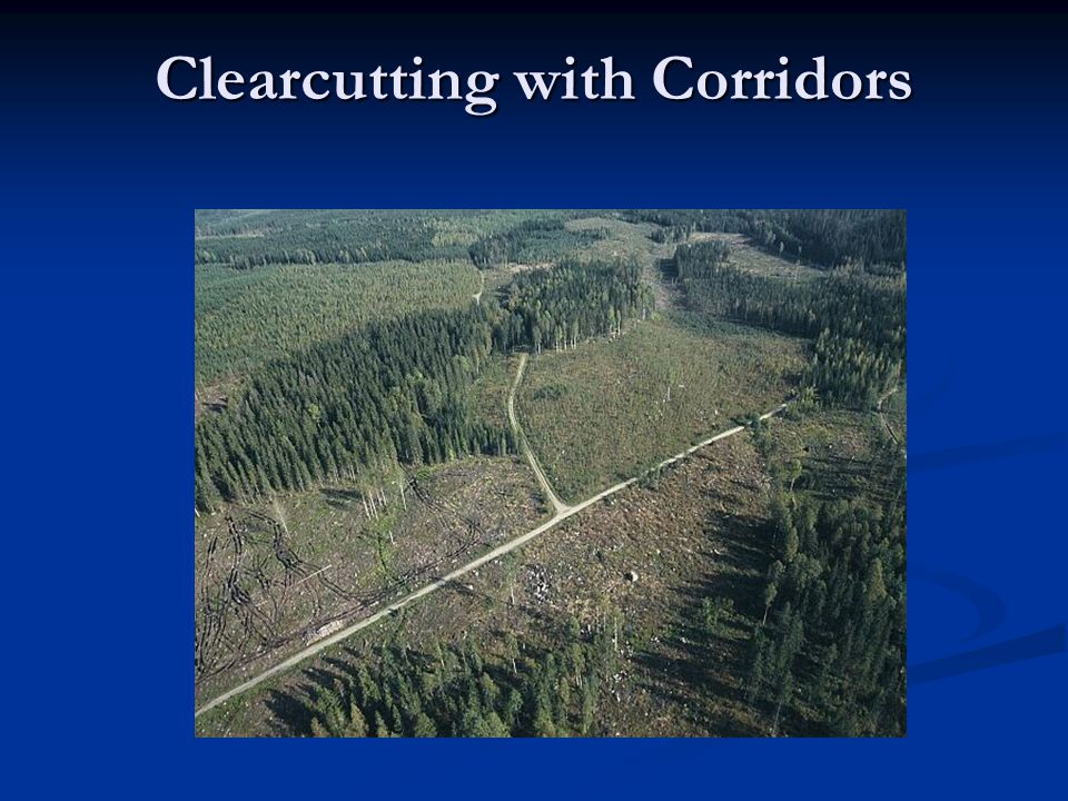 Clearcutting with Corridors