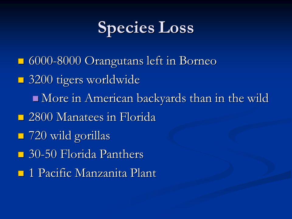 Species Loss 6000-8000 Orangutans left in Borneo 3200 tigers worldwide