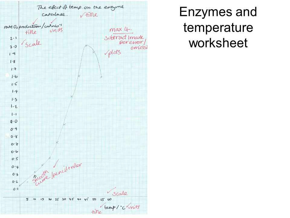 Answers Remember the change in absorbance takes place because the – Enzyme Activity Worksheet