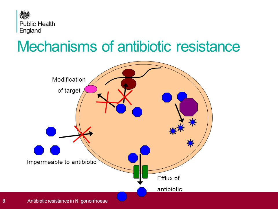 antibiotic resistance essay antibiotic resistance essay effect of antibiotic prescribing in point of business plan