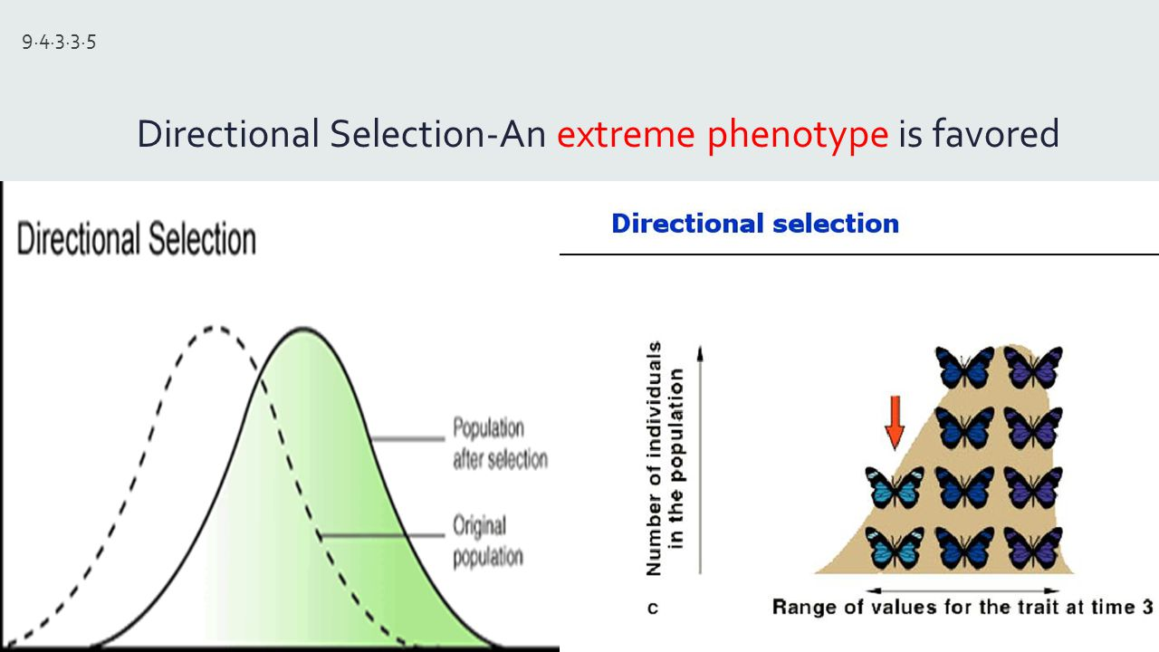 An Extreme Phenotype Natural Selection
