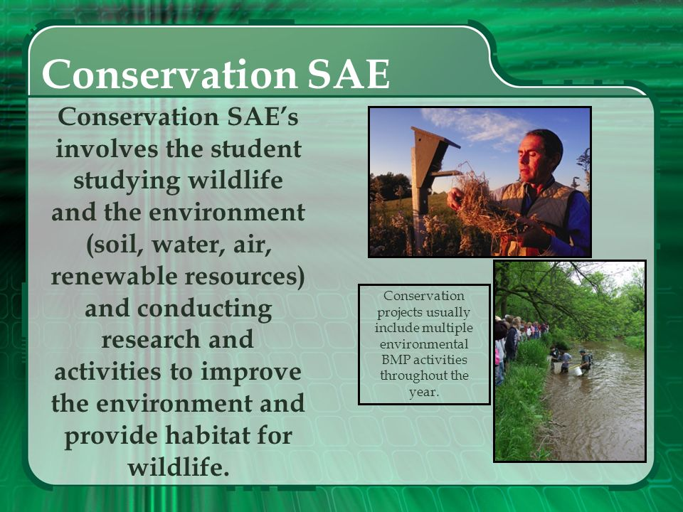 Conservation SAE Conservation SAE's involves the student studying wildlife and the environment.