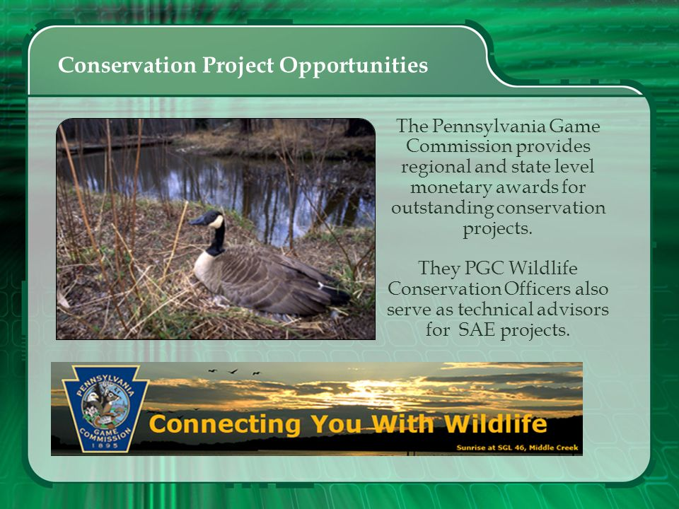 Conservation Project Opportunities