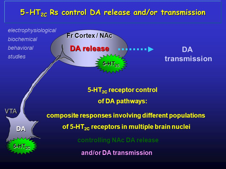 5-HT2C Rs control DA release and/or transmission