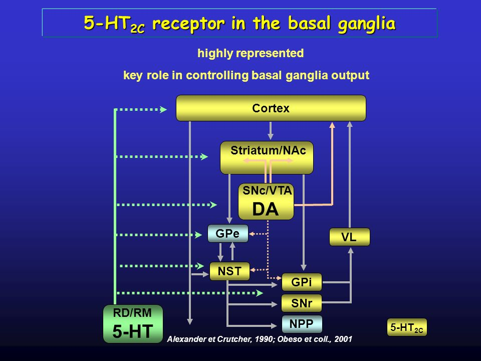 5-HT2C receptor in the basal ganglia