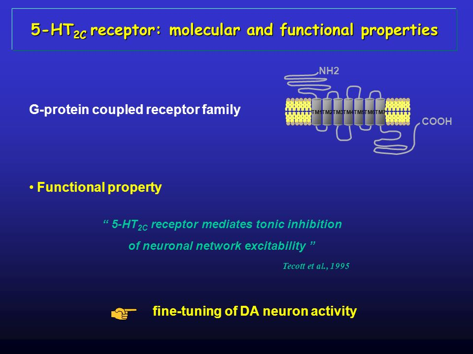 5-HT2C receptor: molecular and functional properties