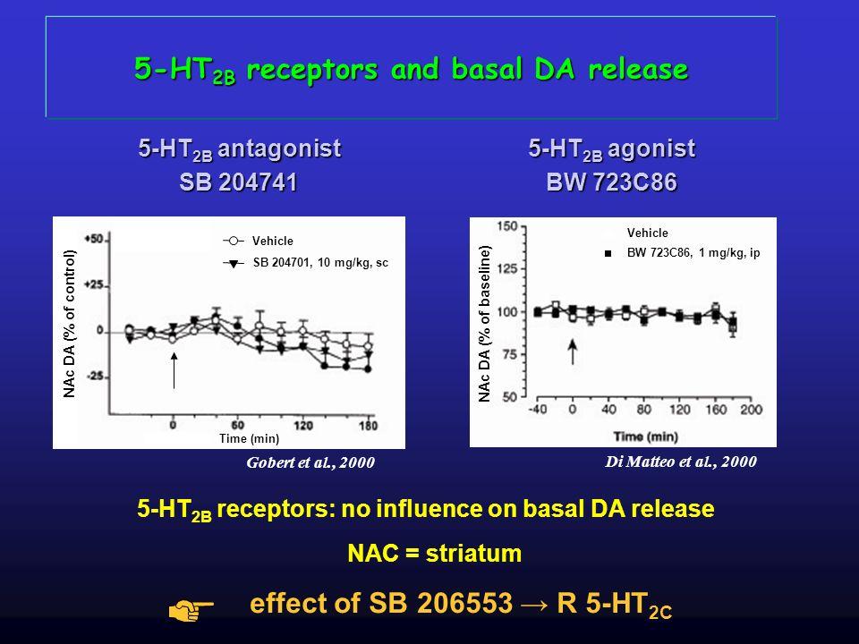 5-HT2B receptors and basal DA release