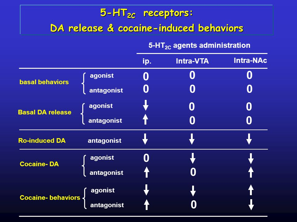 DA release & cocaine-induced behaviors