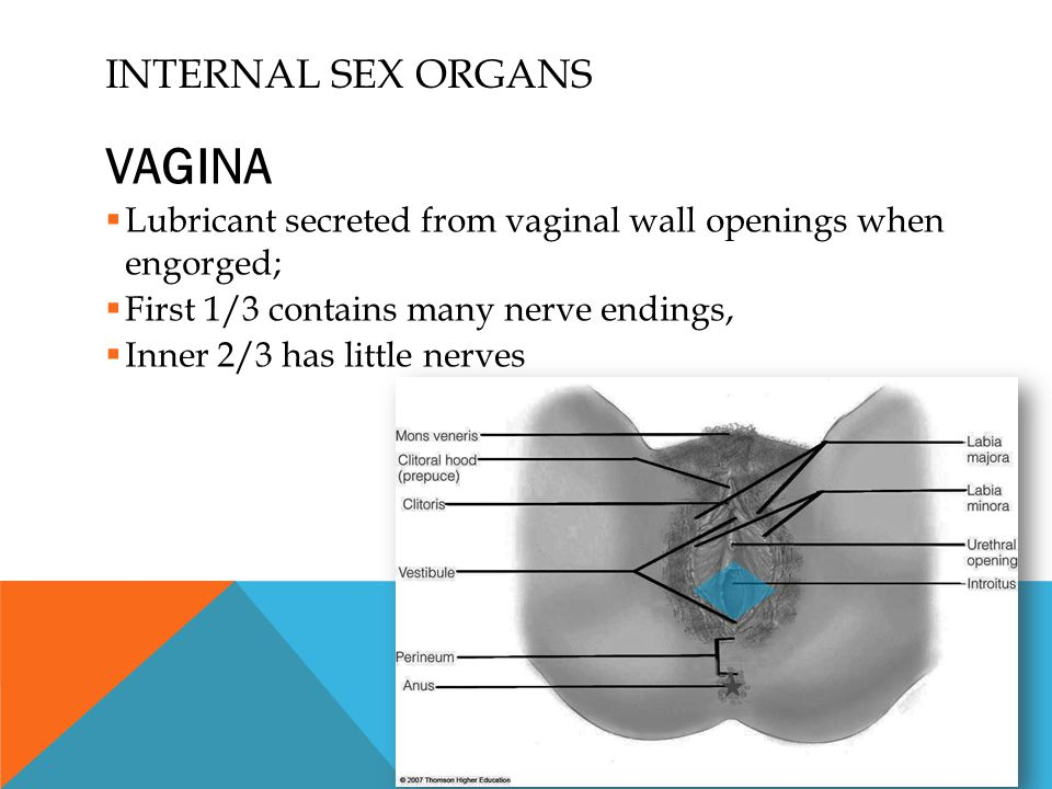 Vaginal nerve endings physiology