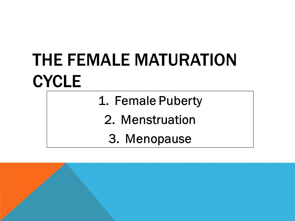 The Female Maturation Cycle