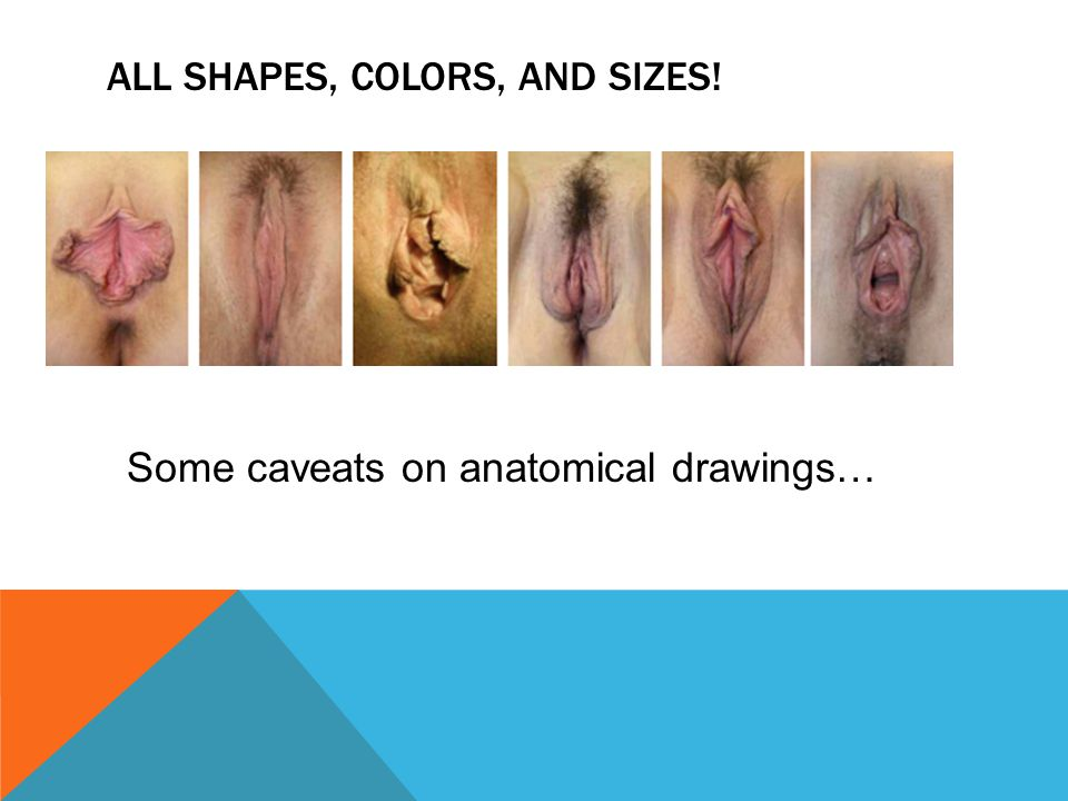 All shapes, colors, and sizes!