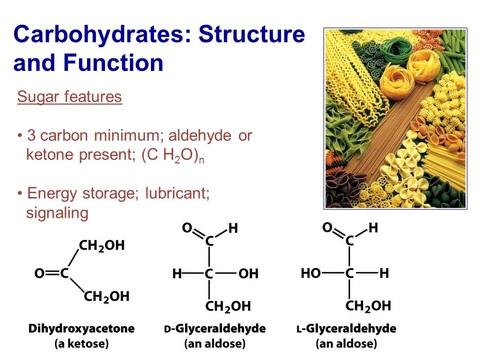 carbohydrates: structure and function - ppt video online download, Sphenoid