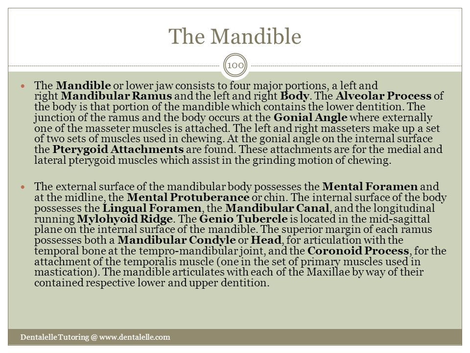 The Mandible