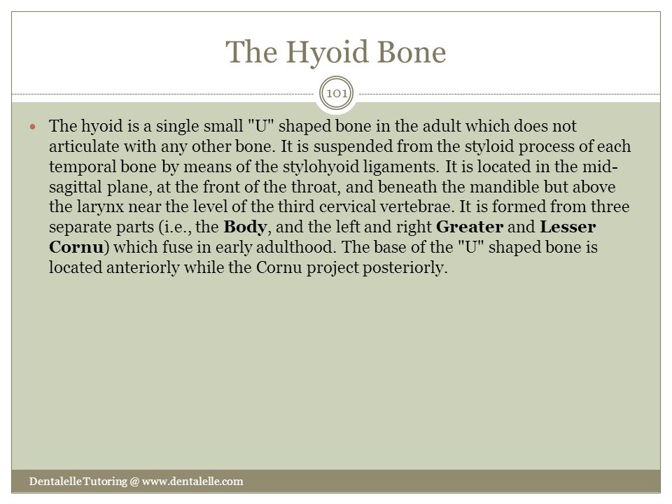 The Hyoid Bone