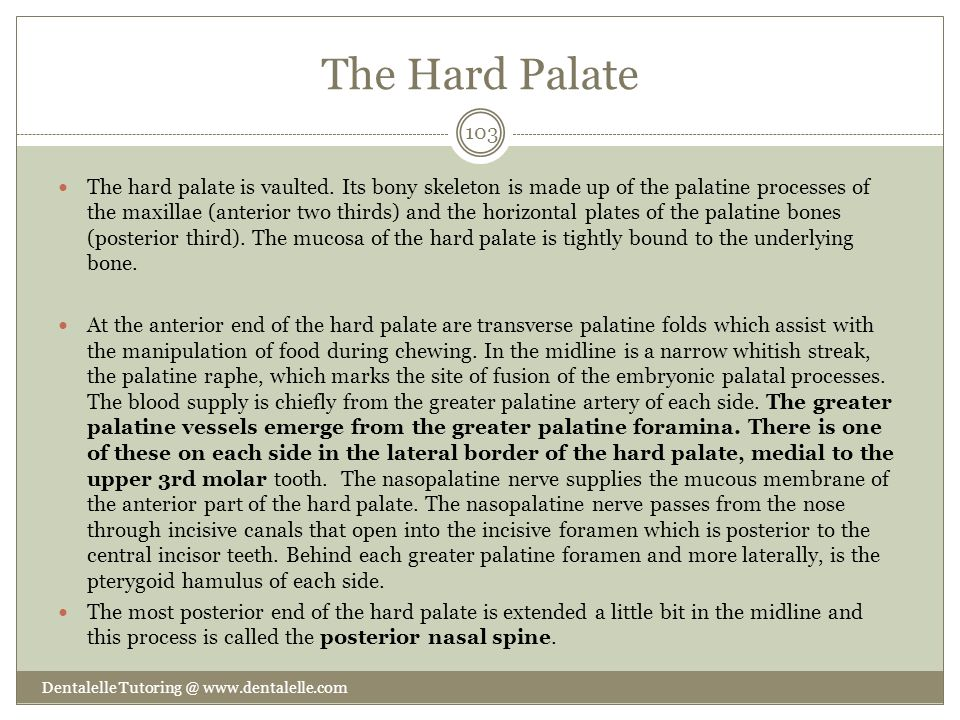The Hard Palate