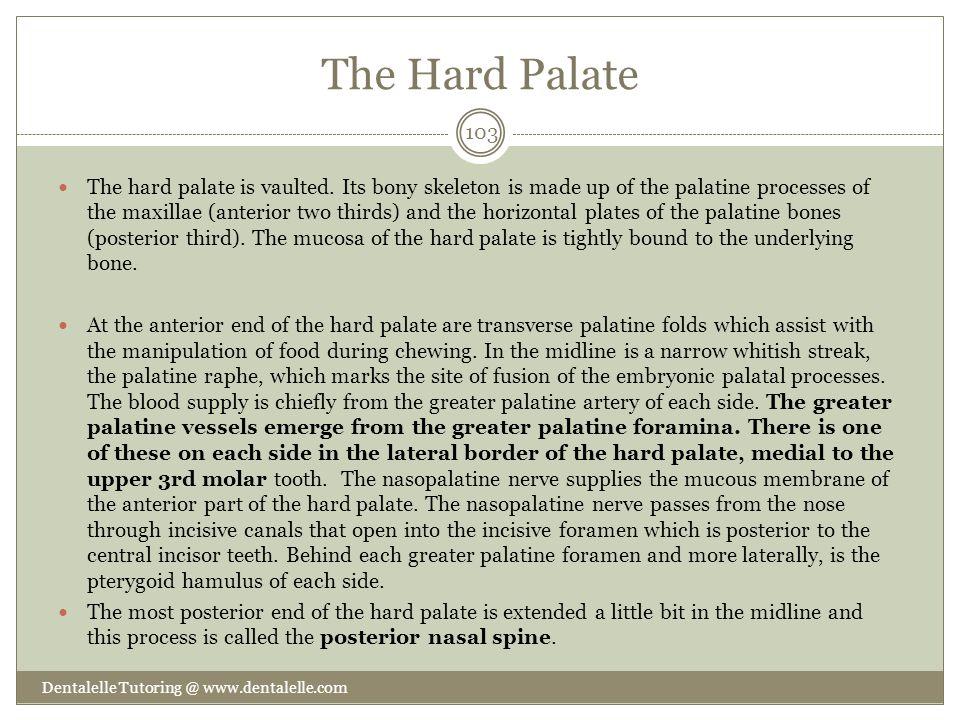 The Hard Palate