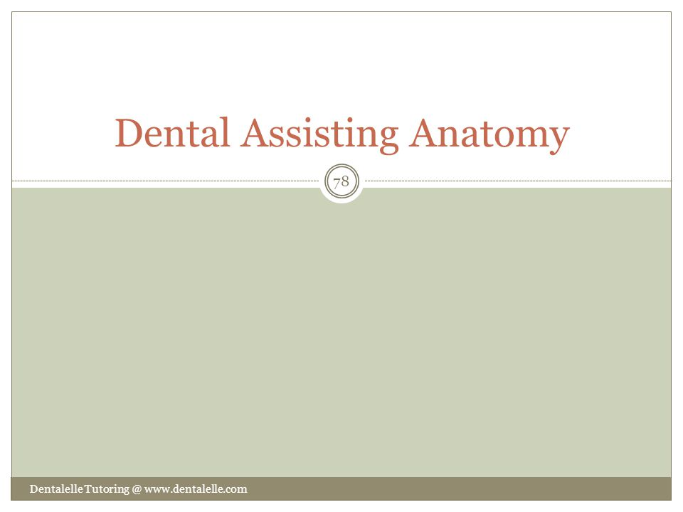Dental Assisting Anatomy