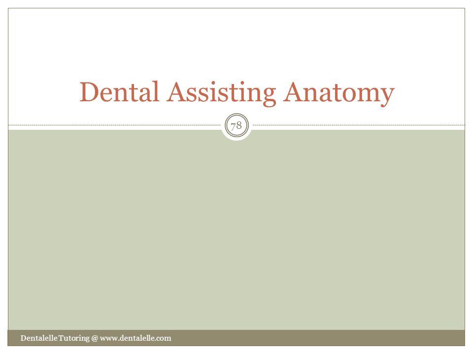 Dental Assisting Anatomy