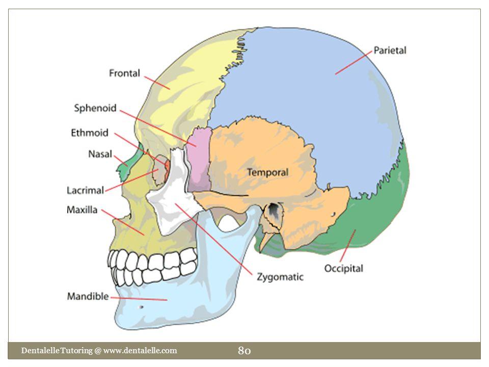 Dentalelle Tutoring @ www.dentalelle.com