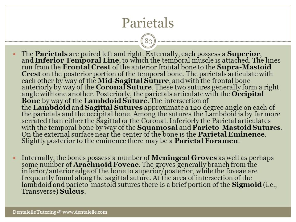 Parietals
