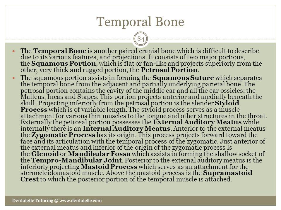 Temporal Bone