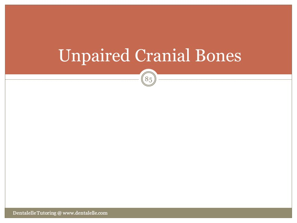 Unpaired Cranial Bones