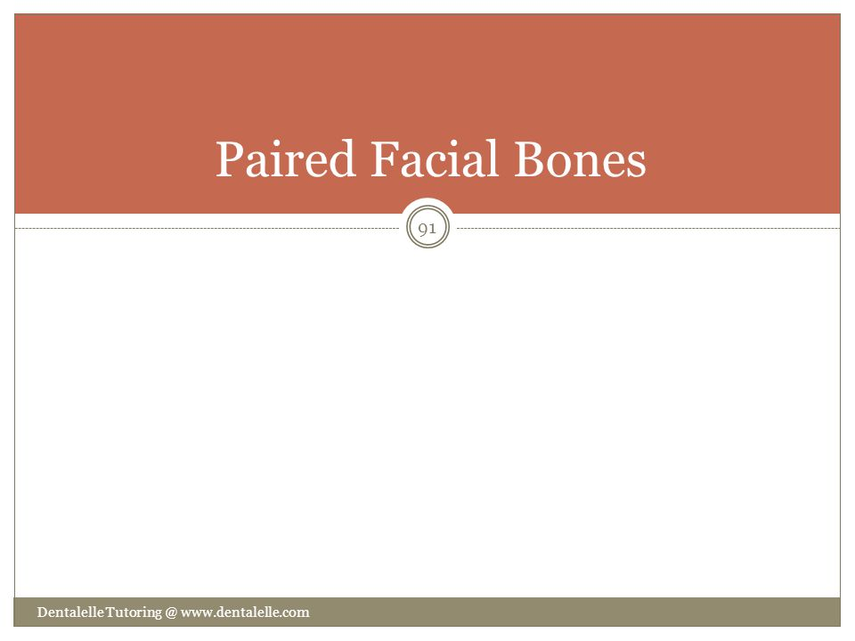 Paired Facial Bones Dentalelle