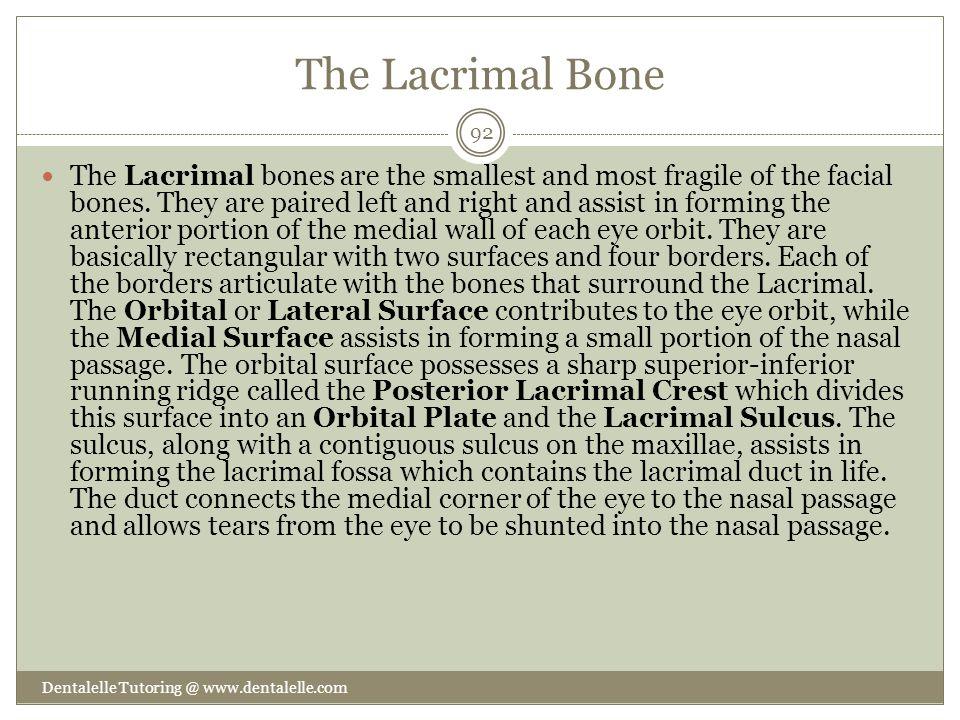 The Lacrimal Bone