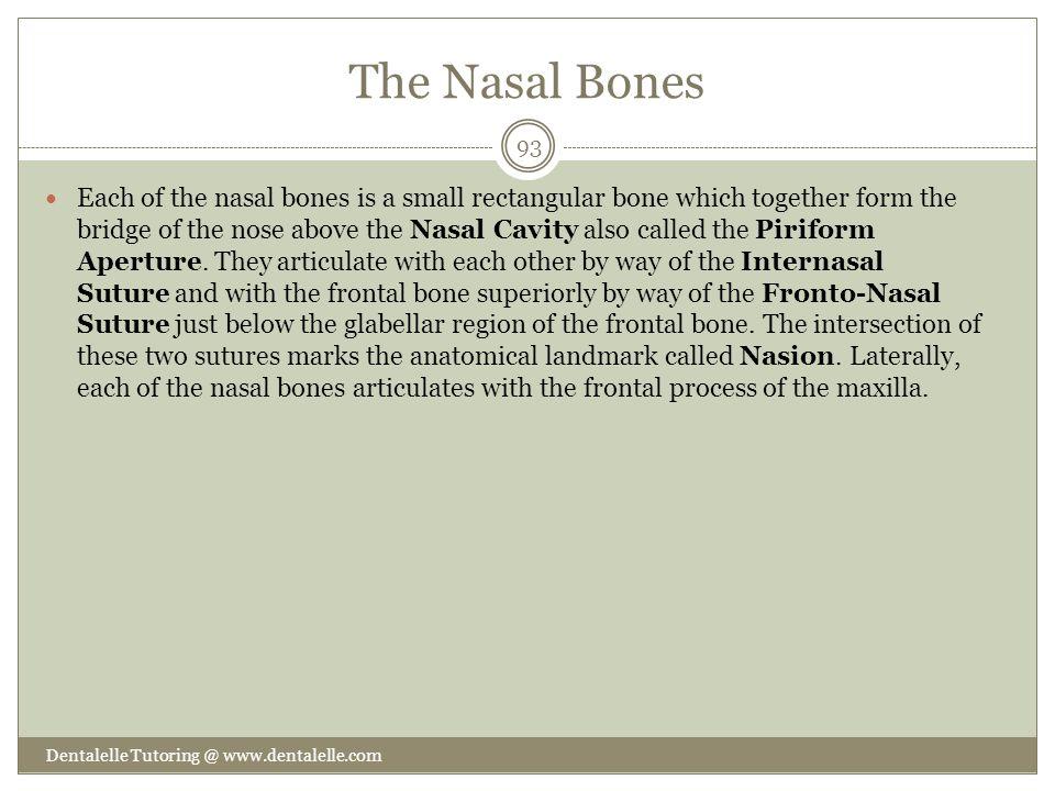 The Nasal Bones
