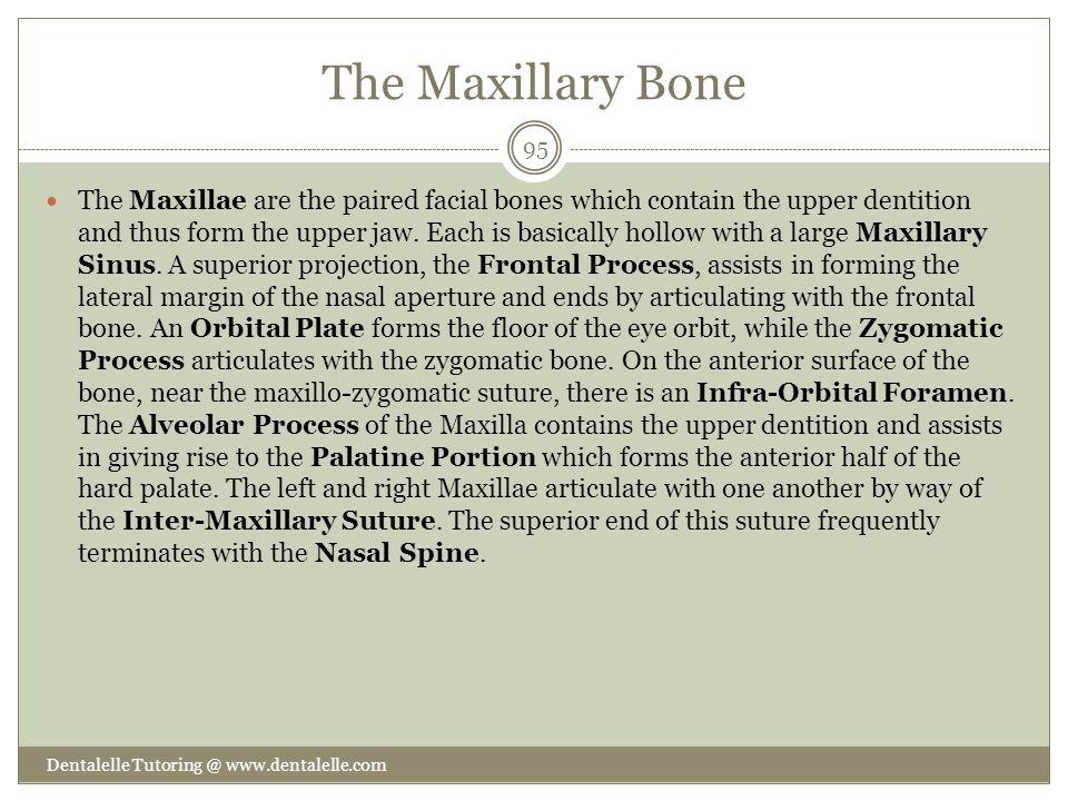 The Maxillary Bone