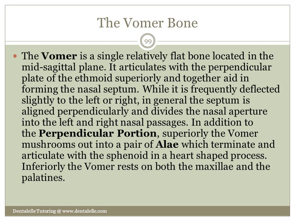 The Vomer Bone