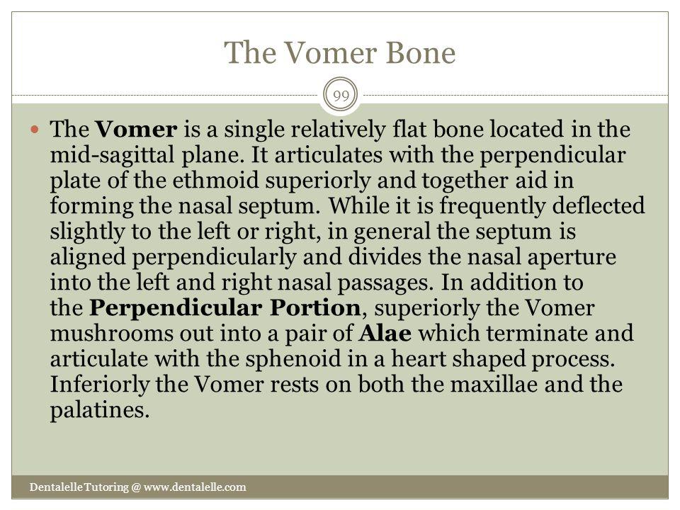 The Vomer Bone