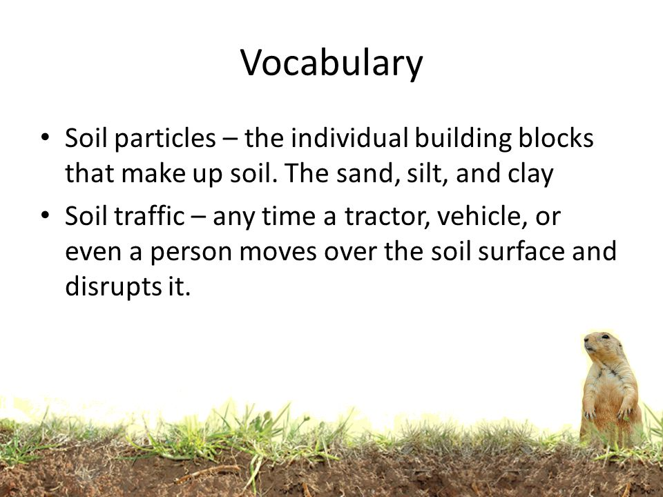 Sizing up soils ppt download for What makes up soil