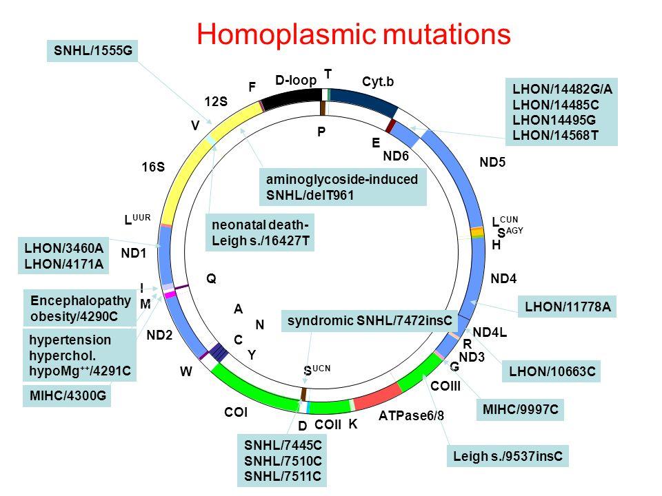 Homoplasmic mutations