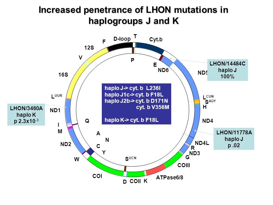 Increased penetrance of LHON mutations in haplogroups J and K
