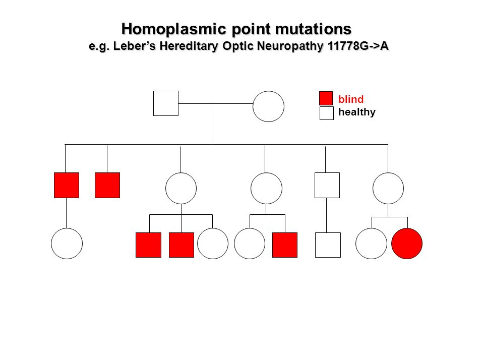 Homoplasmic point mutations