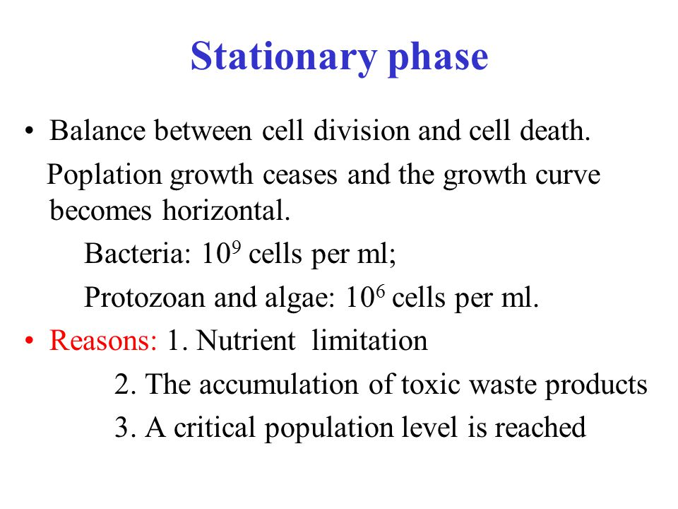 Stationary phase Balance between cell division and cell death.