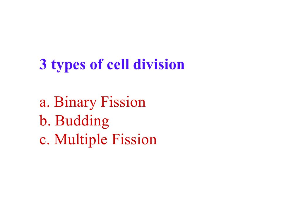 3 types of cell division a. Binary Fission b. Budding c