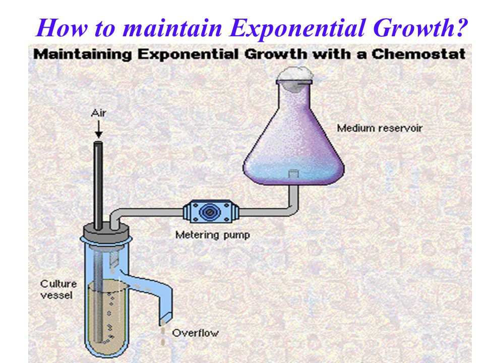 How to maintain Exponential Growth