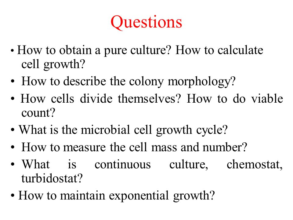 Questions How to describe the colony morphology