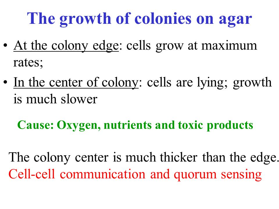 The growth of colonies on agar