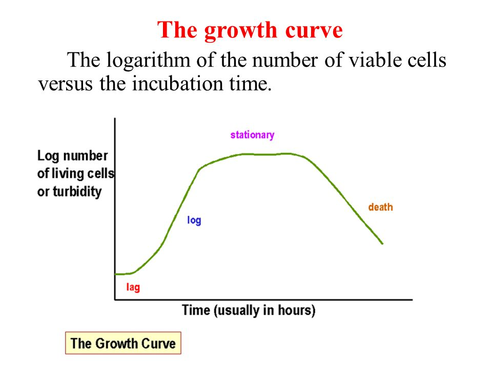 The growth curve The logarithm of the number of viable cells versus the incubation time. .
