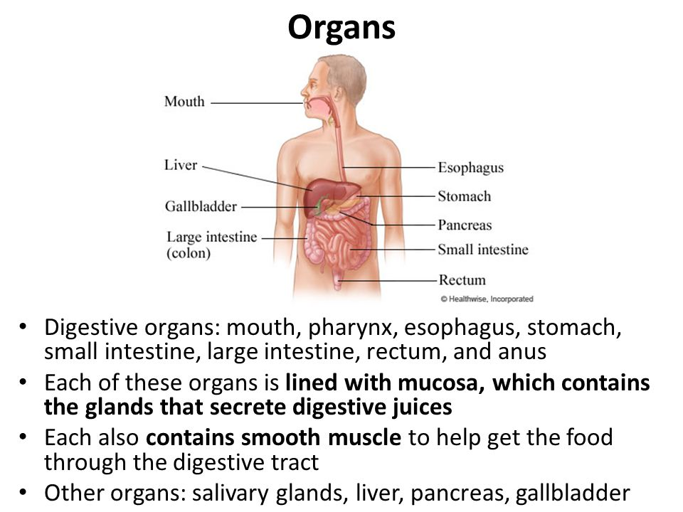 Digestive System. - ppt video online download