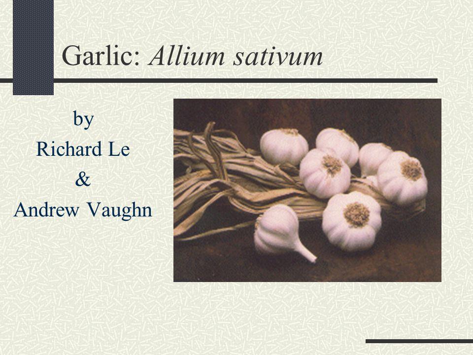 Garlic: Allium sativum